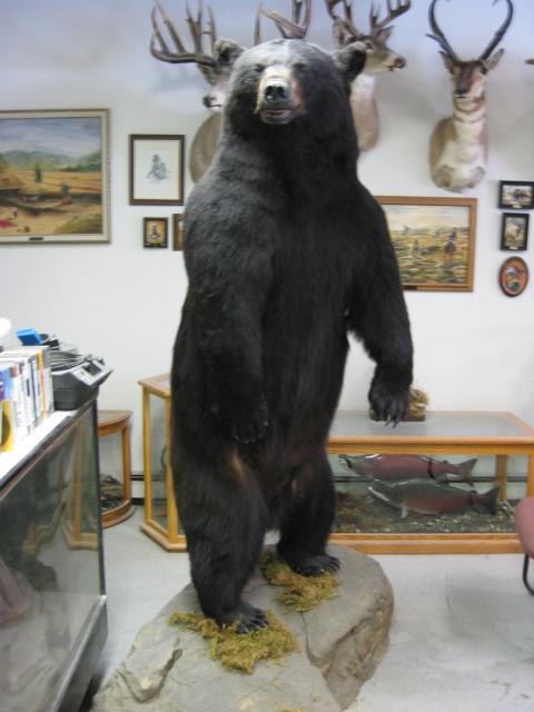 Big Game Lifesize Alaska Wilderness Arts And Taxidermy