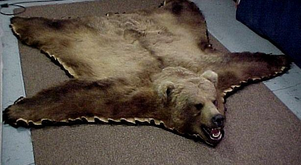 Exceptional Bear Rugs Free Wallpaper. Grizzly Rugs